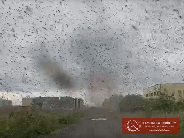 На Камчатке смерчи из миллионов комаров закрыли солнце (фото, видео)