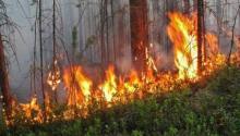 В Мильковском районе горит лес на 6 гектарах