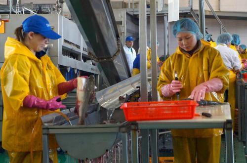 Один цех, десять дел: прокуратура проверила рыбопереработчиков в Октябрьском. Фото: прокуратура Камчатского края