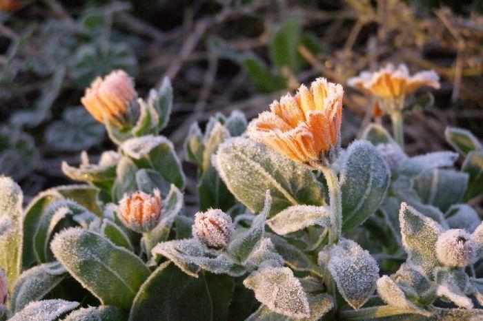 На Камчатке ожидаются заморозки